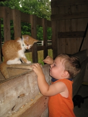 Child with Cat at the Farm Petting Zoo and Living Historic Museum in Door County, WI