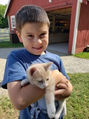 Child and Kitten at the Farm Petting Zoo and Living Historic Museum in Door County, WI