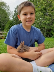 Child with a Baby Rabbit at the Farm Petting Zoo and Living Historic Museum in Door County, WI