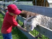 Child Petting a Goat at the Farm Petting Zoo and Living Historic Museum in Door County, WI