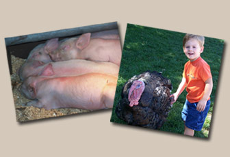 Piglets and Turkey