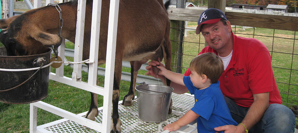 Goat Milking at the Farm Petting Zoo in Door County, WI